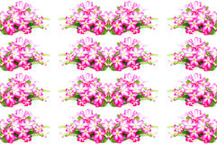 Impala Lily flower Royalty Free Stock Image