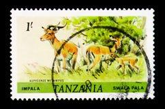 ImpalaAepycerosmelampus, djurserie, circa 1985 Royaltyfri Fotografi