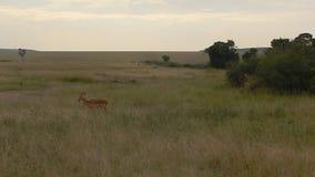 impalas φιλμ μικρού μήκους
