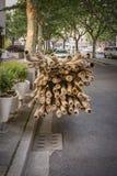 Impalcatura di bambù Fotografia Stock Libera da Diritti