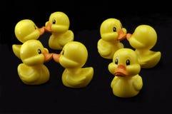 Impar duck hacia fuera Fotografía de archivo libre de regalías