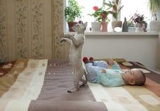 Impari camminare, il mio amico! Fotografia Stock Libera da Diritti