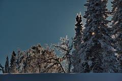 Impassable χιονισμένο σιβηρικό taiga Στοκ Φωτογραφίες