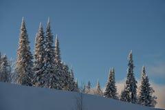 Impassable χιονισμένο σιβηρικό taiga Στοκ Εικόνες