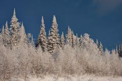 Impassable χιονισμένο σιβηρικό taiga Στοκ Φωτογραφία