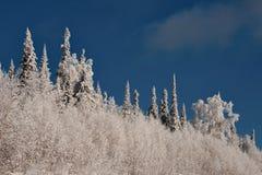 Impassable χιονισμένο σιβηρικό taiga Στοκ φωτογραφία με δικαίωμα ελεύθερης χρήσης
