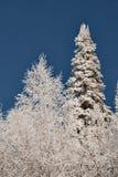 Impassable χιονισμένο σιβηρικό taiga Στοκ φωτογραφίες με δικαίωμα ελεύθερης χρήσης