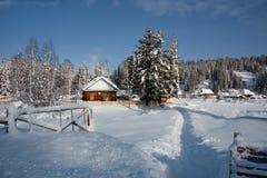 Impassable χιονισμένο σιβηρικό taiga Στοκ εικόνες με δικαίωμα ελεύθερης χρήσης