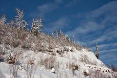Impassable χιονισμένο σιβηρικό taiga Στοκ Εικόνα