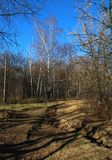 Impassable dirt road in the woods. Royalty Free Stock Images