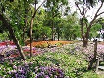 Impatiens display Suan Luang Rama 9 Park. Colorful display at Suan Luang Rama 9 Park Bangkok Thailand Stock Image