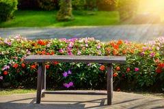 Impatiens Walleriana Sultanii Lizzie Flowers ocupada, grande Detaile Foto de Stock