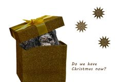 Impatient dog  in a christmas box Royalty Free Stock Photos