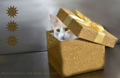 Impatient little cat in christmas box stock photography