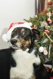 Impedisca di entrare il mio albero di Natale!!! immagine stock