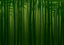 Impenetrable Bamboo Forest Spring Autumn Texture Background Stock Photo