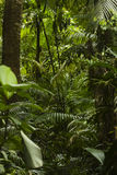 Impenetrable jungle trees and bush Stock Images