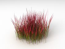 Imperata cylindric red Royalty Free Stock Photography