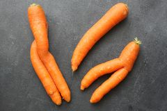 Imperfect carrots on dark board. Three imperfect carrots on dark board, top view, close up stock photo
