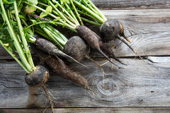 Imperfect organic round and long black radishes for authentic agriculture Stock Photo