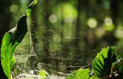 Imperfect perfection of a cobweb for hunt the insects. Space for text royalty free stock image