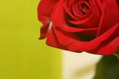 Free Imperfect-rose Royalty Free Stock Image - 604066