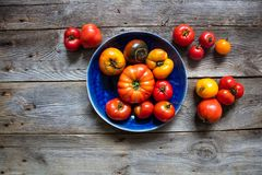 Imperfect tomatoes for organic gardening, healthy agriculture or vegan food Royalty Free Stock Photos
