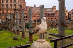 Imperial Fora, Rome Stock Photos