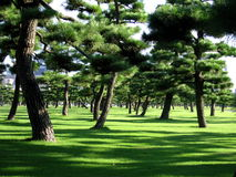 Imperial Garden Tokyo Royalty Free Stock Images