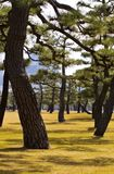 Imperial Garden in Tokyo Royalty Free Stock Image