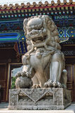 Imperial guardian lion Royalty Free Stock Image