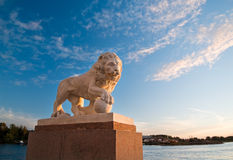Imperial lion at sunset Royalty Free Stock Images