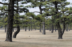 Imperial Palace Garden, Tokyo, Japan Royalty Free Stock Photo