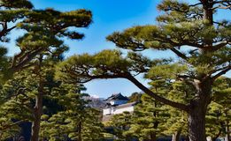 Imperial palace tokyo. Garden Royalty Free Stock Image