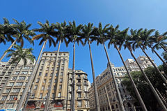 Imperial palm trees of the Se Square, geographical center of Sao Stock Photography