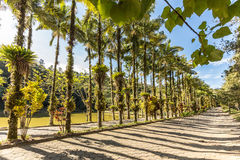 Imperial palms at Malwee Park. Jaragua do Sul, Santa Catarina. Brazil Royalty Free Stock Photos