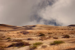 Imperial Sand Dunes stock image