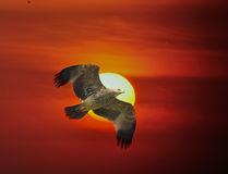 Imperialistiska Eagle Royaltyfria Foton