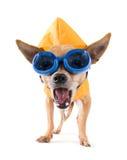imperméable de lunettes photos libres de droits