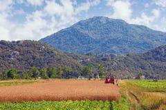 Impianti agricoli Sistemi in valle delle alpi di Dinaric il giorno di estate soleggiato La Bosnia-Erzegovina Immagine Stock Libera da Diritti
