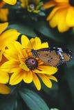 Impianti della farfalla Fotografie Stock Libere da Diritti
