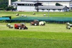 Impianti di agricoltura Fotografie Stock