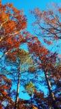 Impianti di autunno Fotografia Stock
