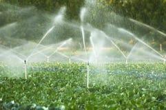 Impianti di irrigazione in un orto Fotografie Stock