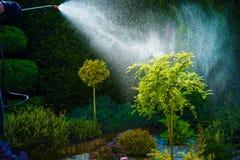 Impianti domestici della primavera del giardino Immagini Stock
