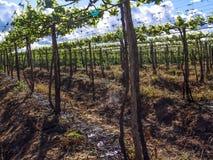 Impianto di irrigazione Fotografia Stock Libera da Diritti