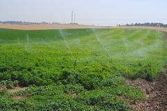 Impianto di irrigazione Fotografie Stock Libere da Diritti