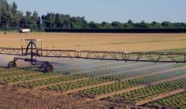 Impianto di irrigazione automatico nel campo Fotografia Stock Libera da Diritti