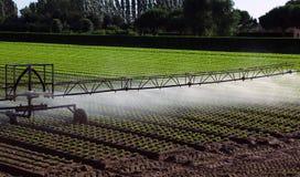Impianto di irrigazione automatico nel campo Immagine Stock