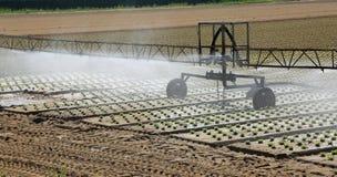Impianto di irrigazione automatico nel campo coltivato con la s fresca fotografie stock